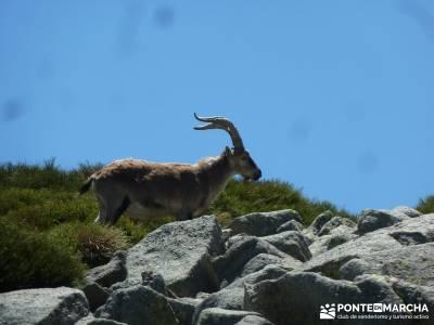 La Mira - Los Galayos (Gredos);taxus bacata excursiones cerca madrid singles madrid grupos